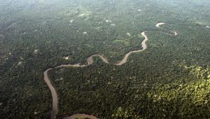 Foto de cima da Floresta Amazônica. Muitas árvores e um rio cortando.