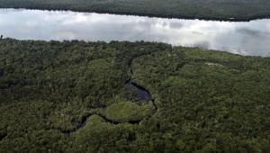 Imagem de uma mata e um rio atrás.