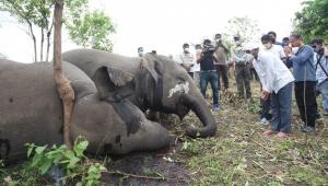 18 elefantes são encontrados mortos em colina no leste da Índia