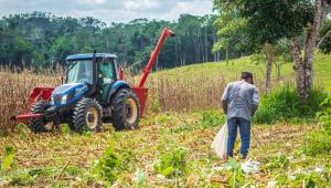 Agricultor trabalha na colheita do milho em propriedade rural da Brasileia, no interior do Acre. Ao lado, um trator azul e vermelho.