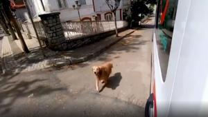 Cachorro seguindo ambulância