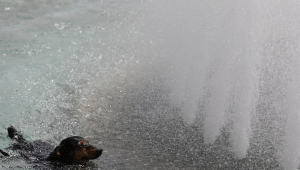 cachorrinho tomando banho em fonte