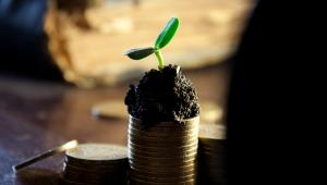 planta nascendo em cima de pilha de moedas