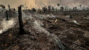 Queimada em Matupi, sul do Amazonas