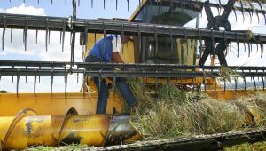 Homem colhendo arroz com uma máquina