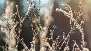 Folhas em primeiro plano com geada