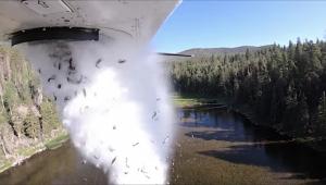peixes arremessados de avião