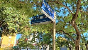 Duas placas de rua azuis em frente a um árvore
