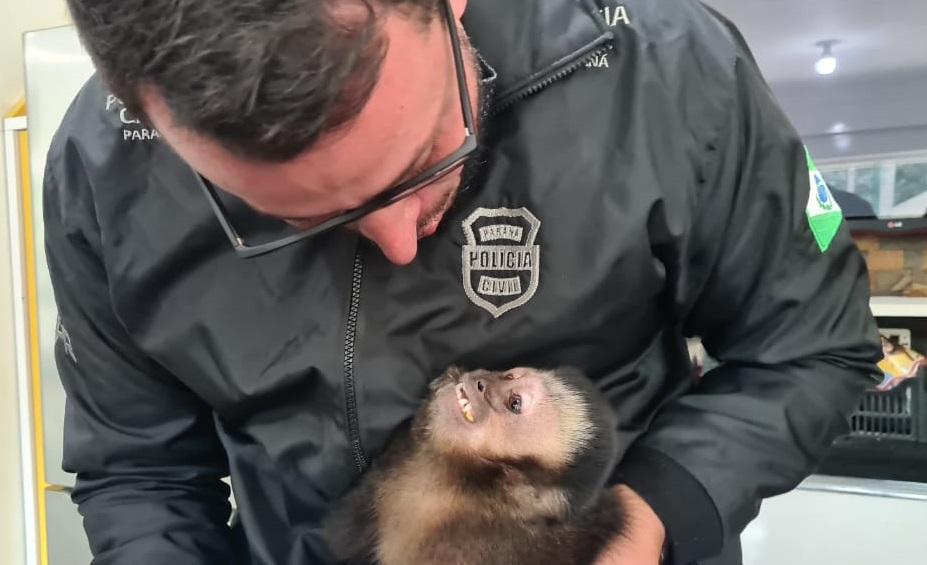 macaco resgatado no paraná