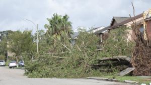 queda de árvore por causa do furacão ida nos estados unidos