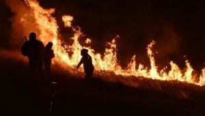 Incêndio já consumiu mais da metade de parque na Grande SP; fogo ainda não foi controlado