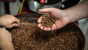Mão pegando um punhado de grãos de café