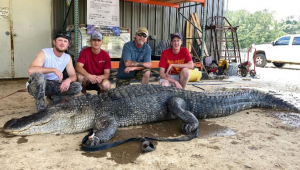 pessoas cercando crocodilo morto