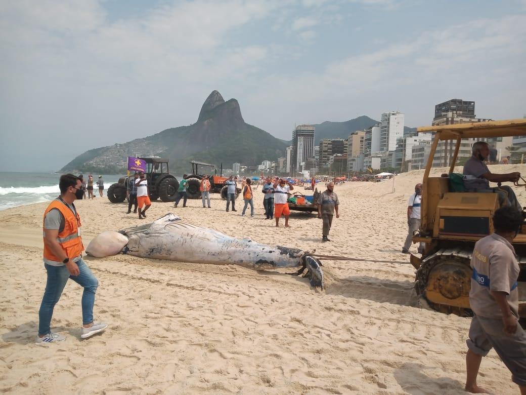 Remoção de baleia jubarte encontrada morta na praia do Leblon, no Rio de Janeiro