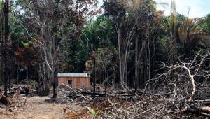 Desmatamento e queimada às margens da rodovia BR-319, em Humaitá, na Amazônia