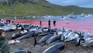 golfinhos mortos na costa das ilhas faroe