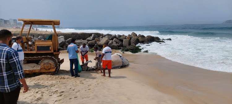 whatsapp image 2021 09 18 at 11.24.41 1 Whale samples found dead on Leblon beach will be analyzed by technicians from UERJ; see photos – Young Pan
