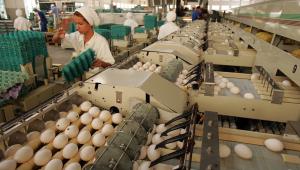 Fábrica de ovos com vários passando por máquinas e pessoas com uniformes verdes trabalhando