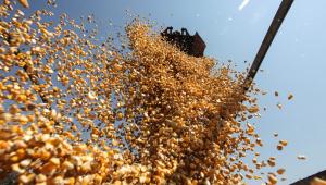 Colheitadeira durante colheita do milho safrinha