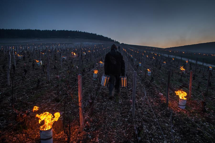 Geada atinge vinícolas da França